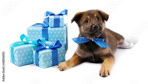 canvas print picture Puppy and boxes with presents isolated on white
