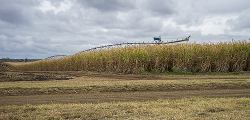 Australian Sugarcane Plantation