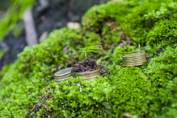 Coins lined cascade on the background of moss