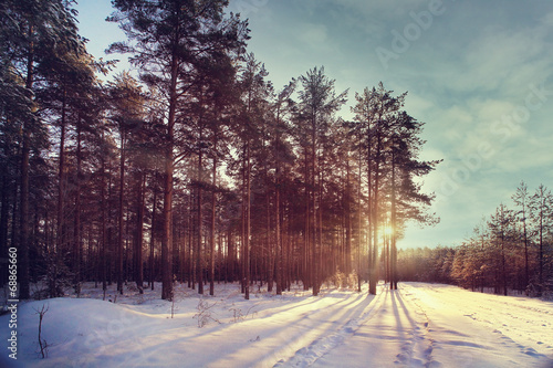 Winter forest sunset sunbeams - 68865660