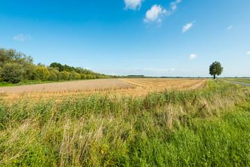 Large stubble field in summertime