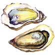 Fresh opened oyster on white background - 68867430