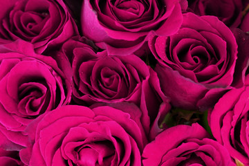 Purple pink roses bouquet as background