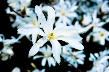 Gartenblume Nahaufnahme
