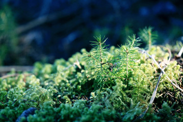 macro small tree in the moss