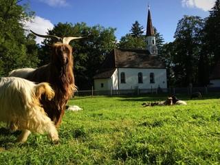 Bayerische Idylle mit Ziegenbock und Kapelle