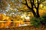 Fototapety Goldener Herbst mit ruhigem See im Park :)