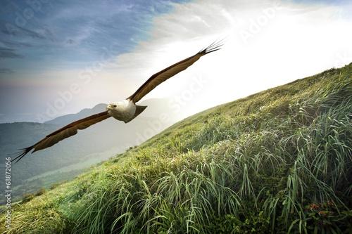 In de dag Eagle free flight through our wings