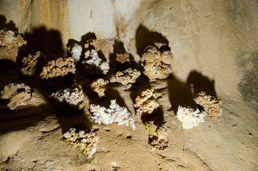 Stalagmites. Marble Cave. Crimea.