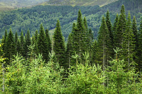 canvas print picture wald