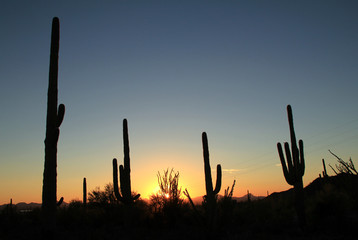 Sunset Over Saguaro National Park, Arizona, United States