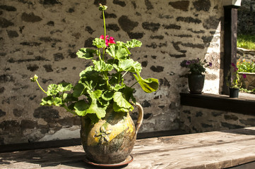 Ceramic flowerpot with geraniums in front of stone church