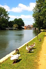 View along the River Thames, Oxford © Arena Photo UK