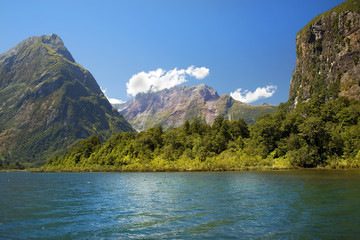 wild nature of New Zealand