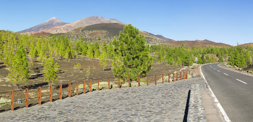 Teide volcano behind trees in Tenerife national park (panorama)