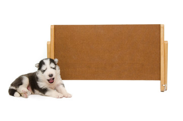 Puppy sleep with banner
