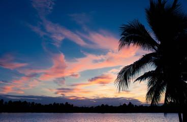 coconut tree silhoette