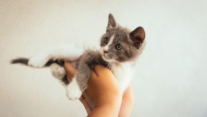beautiful kitten relaxes in the hands