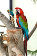 Parrot in captivity at zoo