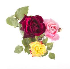 Top view of flowers in vase