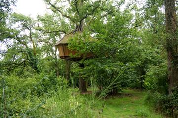 big tree hut in tree