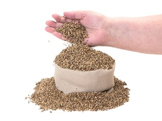 Hemp seeds poured in to a bag by woman hands