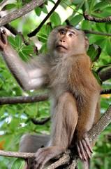 Makake am Baum