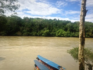 Selva - Ecuador