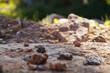 canvas print picture - Kleine Steine auf dem Weg