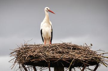 White stork on a nest, Salburua park, Vitoria(Spain)