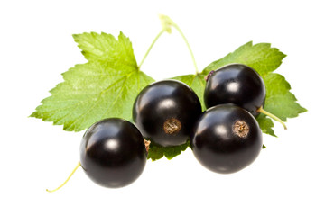 Black currant on a white background