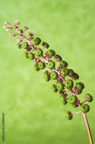 canvas print picture Fiore viola sfondo verde, illuminazione in studio