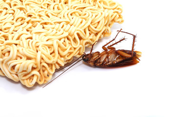 cockroaches on a white background