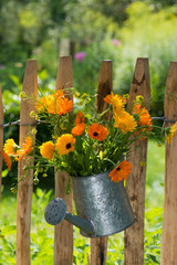 Blumenstrauß am Staketenzaun