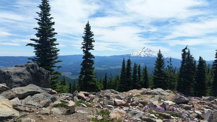 Mt. Hood in July