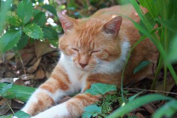 庭で遊ぶ茶猫