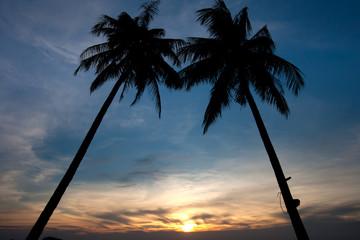 Twin Palm tree sunset
