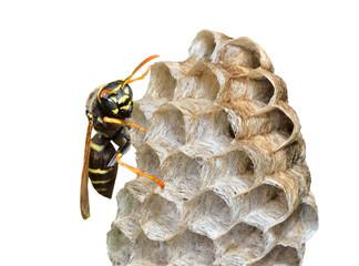 Small wasp 8