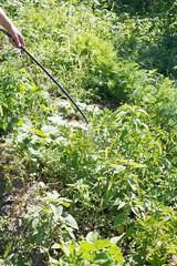 spraying of pest-killer on country garden