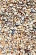 canvas print picture - sand and seashells - beach of Azov Sea close up