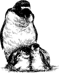 hand drawn penguin