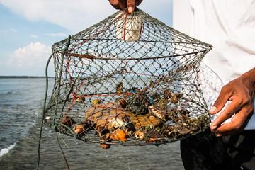 Shell in the net