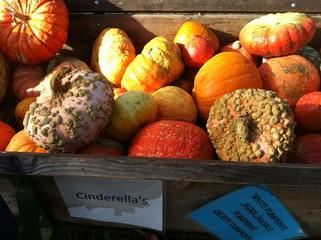 Bin of pumpkins