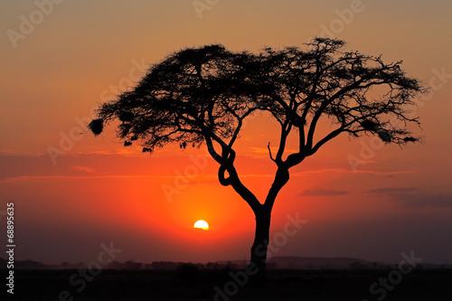 zmierzch-z-sylwetkowym-drzewem-amboseli-park-narodowy