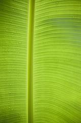 green leaf and dew