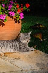 Grey cat sitting by flowerpot © Arena Photo UK