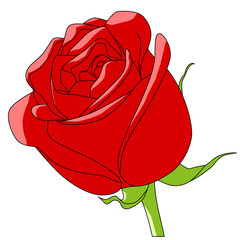 cartoon color vector flower rose red