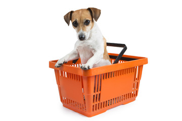 Little dog looks out of the shopping cart