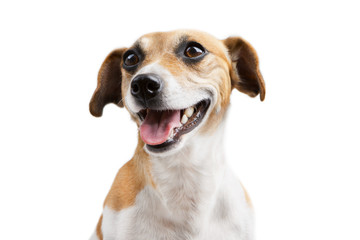 Portrait of beautiful happy smiling welcoming dog