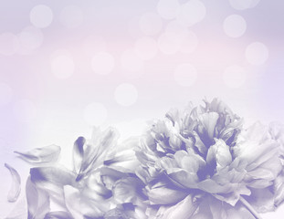 Beautiful flowers made with color filters - Abstrack background